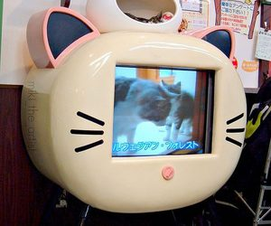 cat, tv, and cute image