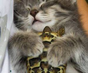 cat, turtle, and animal image