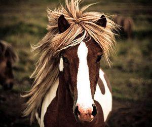 amazing, animal, and beauty image