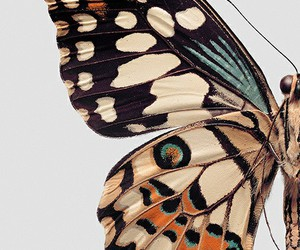 butterfly, nice, and fly image