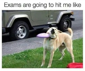 dog, exams, and funny image