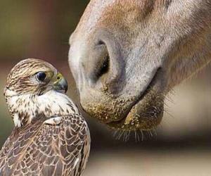 horse, animal, and bird image