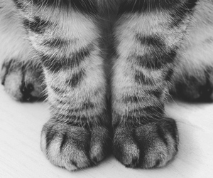 paws and tabby image