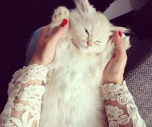cat, beautiful, and luxury image