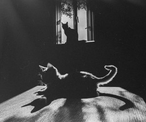 cat, black and white, and black image