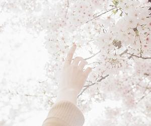 flowers, pastel, and sakura image