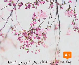 عربي, وردي, and تصميم image