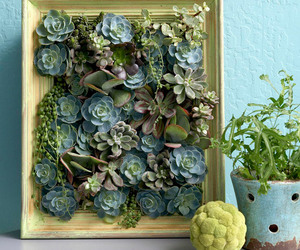 succulents and plants image