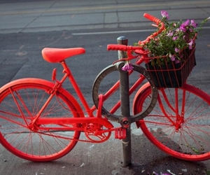 bike, red, and bicycle image