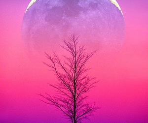 moon, pink, and tree image