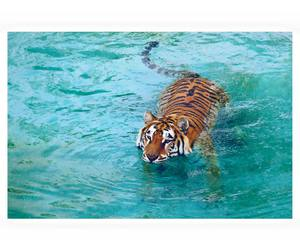 tiger, beautiful, and blue image