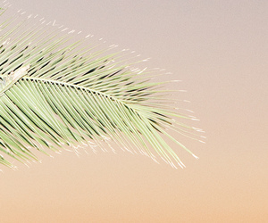 aesthetic, palm tree, and pastel image
