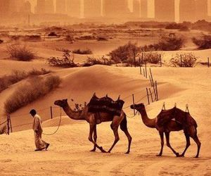 camel and Dubai image