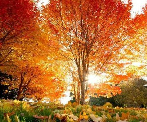 autumn, nature, and orange image
