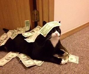 cat, money, and funny image