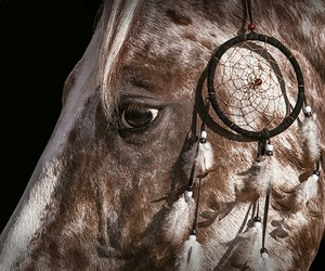 brown, dream catcher, and horse image