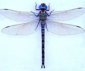 dragonfly, beautiful, and insect image