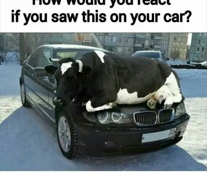car, what, and funny image