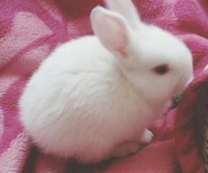 bunny, sweet, and kawii image