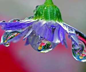 beautiful, flower, and dew image