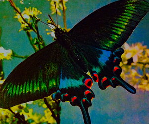 art, butterfly, and color image