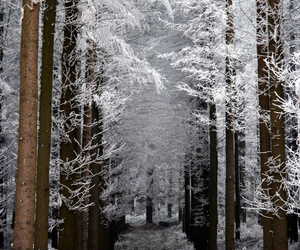 snow and nature image