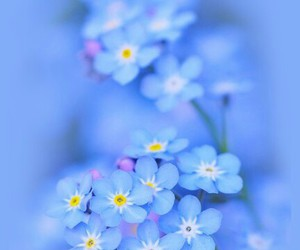 blue, flower, and pretty image