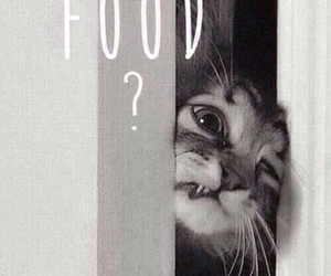 b&w, cat, and food image