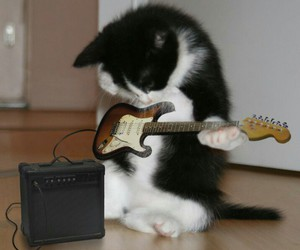 cat, guitar, and rock image