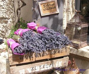 lavender, provence, and mon amour image