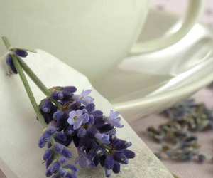 lavender, provence, and tea image