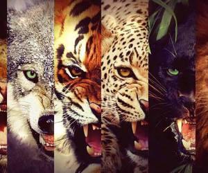 animal, tiger, and lion image