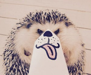 animal, cute, and funny image