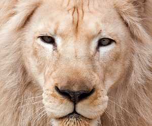 awesome and lion image