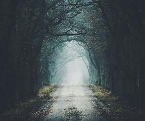 dark forest, sadness, and landscape image