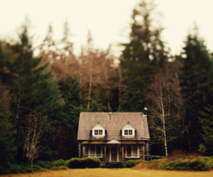 house, nature, and trees image