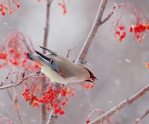 baby, bird, and snow image