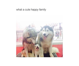 family, cute, and husky image