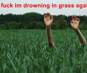 funny, lol, and grass image