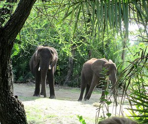 elephants, nature, and tropical image