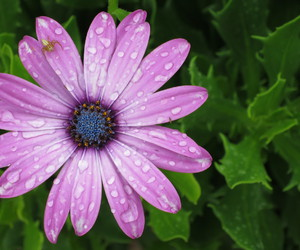 art, droplets, and flower image