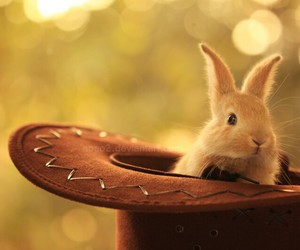 cute sweet bunny animals image