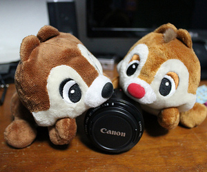 photography, cute, and canon image