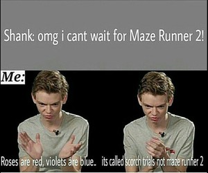 newt, funny, and maze runner image