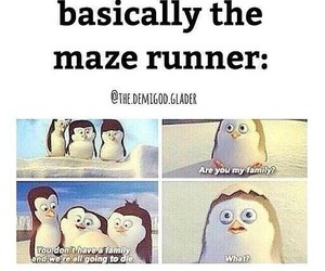 maze runner, funny, and the maze runner image