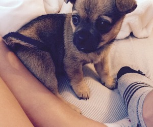 adorable, dreamy, and puppy image