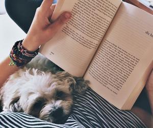 books and dog image