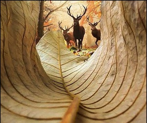deer, autumn, and leaves image