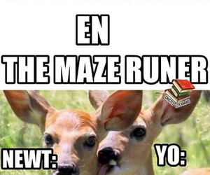 books, the mazze runner, and funny image
