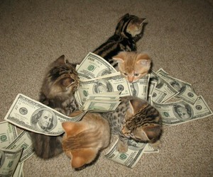 cat, money, and kitty image